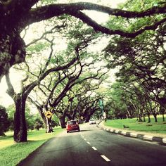 These trees has stood test of time, ignorance and urbanisation. Taiping, Countries, Scenery, Sidewalk, Country Roads, Trees, Places, Instagram, Landscape