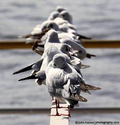 Krásné Tapety: krásných ptáků Tapety