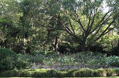 Camellia Gardens, Caringbah South - Sutherland Shire Council