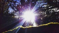 """Come forth into the light of things, let nature be your teacher -W.W. #babysteps #nature #photography #natureporn #exploreoregon #pnwonderland #pnw #oregon #sun #photographer #pictureperfect #mood #potd #picoftheday #onpoint #gorgeous #blessed #love #positivevibes #qotd #quotes #naturephotography #oregoncoast #tree #l4l #fallowme #like4like #doubletap #smile #beautiful"" by (s0ul3ssg1ng3r23). love #photographer #natureporn #picoftheday #pnwonderland #pictureperfect #gorgeous #exploreoregon…"