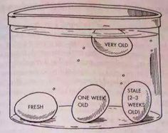 How to tell how fresh your eggs are