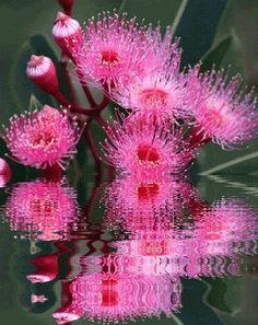 beautiful flower gif | Gif, Animated Gifs, Animated Flowers, Animated Graphics, Beautiful ...