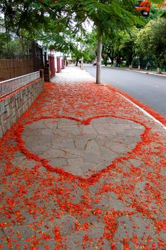 What to do with the Flamboyan flowers that fall over onto the sidewalk? Show your love! How clever! (my heart it)