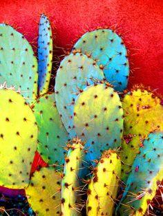 Cactus, Cacti, Cactuses - Prickly Pear Make Me Scream null http://www.amazon.com/dp/B00E5P2UTU/ref=cm_sw_r_pi_dp_mI7Hvb0BR05BA