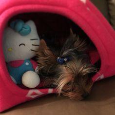 In my little igloo