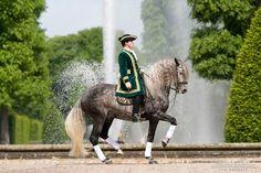 Lusitano - Baroque Horse Magazine