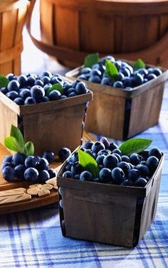 Start your day with Blueberries! SHOTT Blueberry and Green Tea makes a great hot tea Infusion. Soothing, warm, Blueberry goodness starts your day off right! Fruit And Veg, Fruits And Vegetables, Fresh Fruit, Delicious Fruit, Tasty, Blueberry Farm, Blueberry Picking, Blueberry Delight, Highbush Blueberry