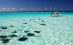 Stingray Sandbar in the Cayman Islands