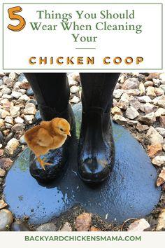 Backyard Coop, Backyard Farming, Backyard Chickens, Chicken Illness, Fancy Chicken Coop, Fancy Chickens, Homestead Farm, Chicken Breeds, Nesting Boxes