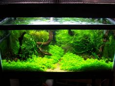 Aquascaping Ideas | Adventures In Aquascaping