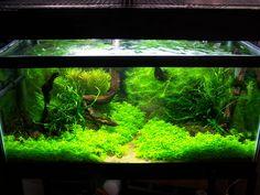 ArtFreshwater Aquascape
