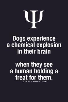 Psychology Facts : Photo