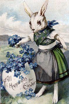 Bunny Forgets Me Not .. vintage postcard... #Easter