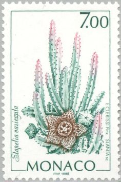 Succulents on Stamps: Orbea variegata, Monaco, 1998 at WorldOfSucculents.com
