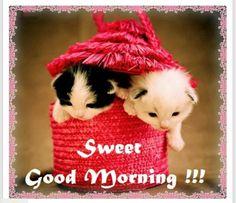 Sweet good morning!