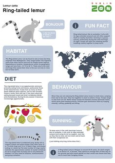 animal infographics for children to learn about zoo animals