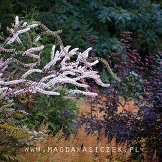 Magda Wasiczek / Collection_collection_arboretum-trojanow-wrzesie-2016