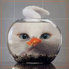 Resultado de imagen para gatitos graciosos