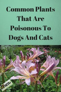 Did you know many common house plants are poisonous to dogs and cats if ingested? For National Poison Prevention Week from March 19th to March 25th we are bringing attention to some of these common plants that are poisonous to dogs and cats in our latest blog.
