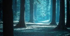 Into the blue forest | Landscape | Pinterest | Dr. oz, Aesthetics and The late