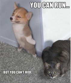 funny animals 3 - Funny Animal Quotes - - If my corgi Ryder had a dream where he was an international spy I imagine it would look like this The post funny animals 3 appeared first on Gag Dad. Funny Animal Quotes, Animal Jokes, Cute Funny Animals, Funny Animal Pictures, Cute Baby Animals, Funny Quotes, Wild Animals, Corgi Pictures, Animal Funnies