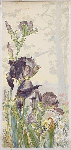 walzerjahrhundert:  Henri Privat- Livement, Quatre  Planches Fleurs Décoratives: Chrysanthèmes, Iris, Pivoines et Tulipes, circa 1900