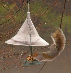 Top 5 Facts to Know about Squirrels and Birdfeeders - The Zen Birdfeeder -- trying to keep the squirrels out of my cardinal feeder ...