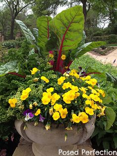 Thriller, Spiller, Filler ~ Using Rutabaga and Parsley in container gardens ~ Gorgeous! by Posed Perfection #containergarden #fwbg