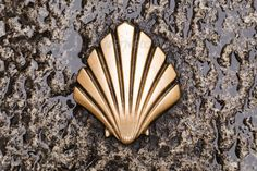 Symbol of the camino de santiago ...  arrow, burgos, camino de santiago, compostela, direction, gold, holy, marker, pilgrim, pilgrimage, rain, road, route, rural, santiago, shell, sign, spain, street, symbol, track, travel, trip, walk, way, way of st. james, wet