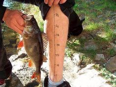 Hilarious Fishing Photos That Were Perfectly Timed - Daily Choices Fishing Store, Fishing Life, Fishing Humor, Going Fishing, Fly Fishing, Fishing Games, Best Fishing Times, Fish Flip Flops, Fishing In Canada