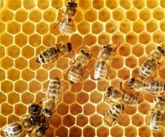 Propolis, bromelain, Vitamin C and protein restriction as natural cancer treatments. Eggplant extract for skin cancer. Professional Development For Teachers, Honey Benefits, Health Benefits, Raw Honey, Honey Bees, Cancer Treatment, Alternative Health, Health Articles, Health Tips