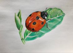 Animal Drawings, Insects, Bee, Animals, Honey Bees, Animales, Animaux, Bees, Animal