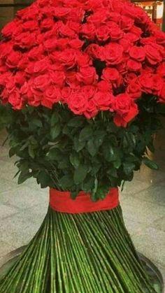 Beautiful Flowers Photos, Beautiful Flowers Wallpapers, Flower Photos, Beautiful Roses, Rose Flower Wallpaper, Flowers Gif, Pretty Flowers, Large Flower Arrangements, Happy Birthday Flower