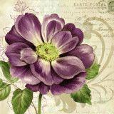 Study in Purple I Poster van Pamela Gladding