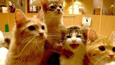 可愛すぎて悶絶!おしゃれすぎる猫カフェ「MoCHA(モカ)」で子猫と戯れよう 9枚