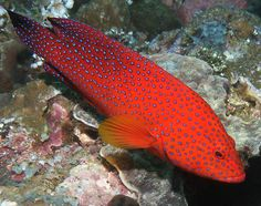 Philippines Underwater Highlights