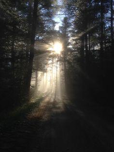 """Nature spontaneously keeps us well.  Do not resist her!""  -Henry David Thoreau"