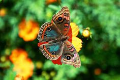 """The caterpillar does all the work, but the butterfly gets all the publicity.""   ― George Carlin"