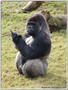 FU says the Gorilla!