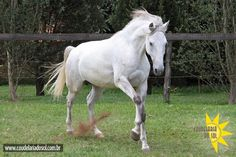 Coudelaria do Sol - Cavalos Lusitanos