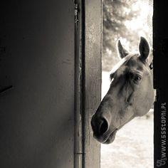 Koń w dom
