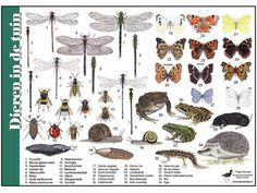 Plant Insects, Miniature Plants, Heart Melting, Animals Of The World, Fauna, Biology, Projects To Try, Wildlife, Comics