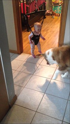 A very focused red Border Collie named Dakota (Day), keenly studies the shadow of her human sibling Alexis as she bounces in a Jolly Jumper before attempting to imitate the springy movement. Accord...