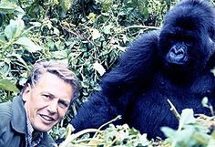 David Attenborough with Rwandan gorilla