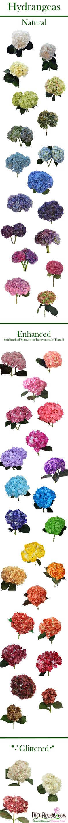 FiftyFlowers.com has Hydrangeas in Every Color! Choose from Natural True Blues, Airbrushed Hot Pinks and even Glittered Hydrangeas, perfect for adding a bit of sparkle to your arrangements!