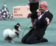 Kirby, the little Papillon who won Best in Show at the Westminster dog show in 1999