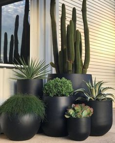 garden in pots exotic_nurseries sure know how to create the ULTIMATE pot cluster! Lusting over exotic_nurseries wissen genau, wie man den ULTIMATE-Topf-Cluster erstellt! House Plants Decor, Plant Decor, Front Yard Landscaping, Backyard Patio, Backyard Ideas, Balcony Ideas, Balcony Decoration, Modern Backyard, Home Decoration