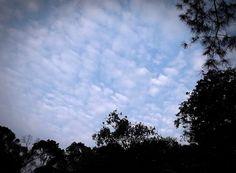 Langit Kebun Seni