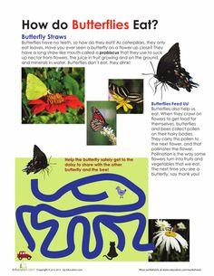 Worksheets: How Do Butterflies Eat?