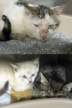 More neglect and cruelty seen as cats are dumped at NC shelter